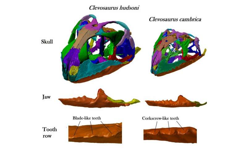Bristol undergraduate reconstructs the skulls of 2 species of ancient reptile