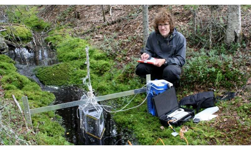 Can smarter forest buffer strips along streams help to mitigate climate change?
