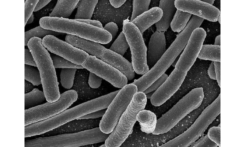 CDC investigates mystery E. coli outbreak affecting 5 states
