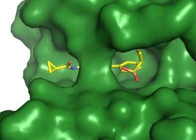 Chemical probe can regulate signaling pathway and block cell invasion by arboviruses