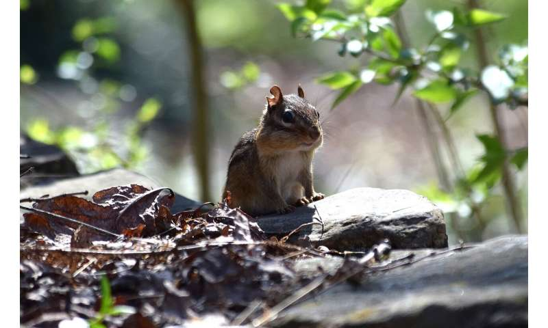 Study finds small mammals aid expansion of warm-climate trees