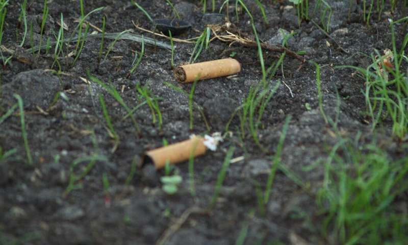 Cigarette butts are the forgotten plastic pollution—and they could be killing our plants