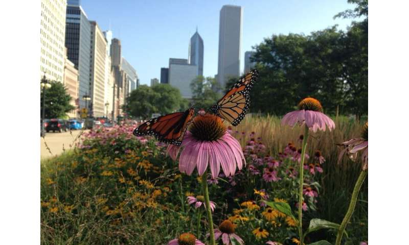 Cities are key to saving monarch butterflies