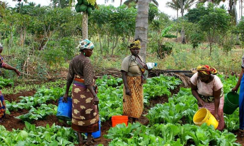 Climate pioneers: how small farmers could be leading the way towards