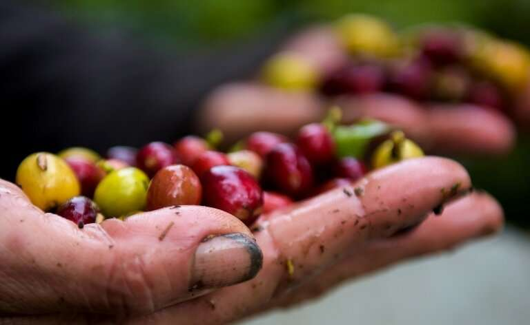 Coffee is the world's favourite beverage but its wild species—vital for maintaining commercial crop variety—are confined to tiny