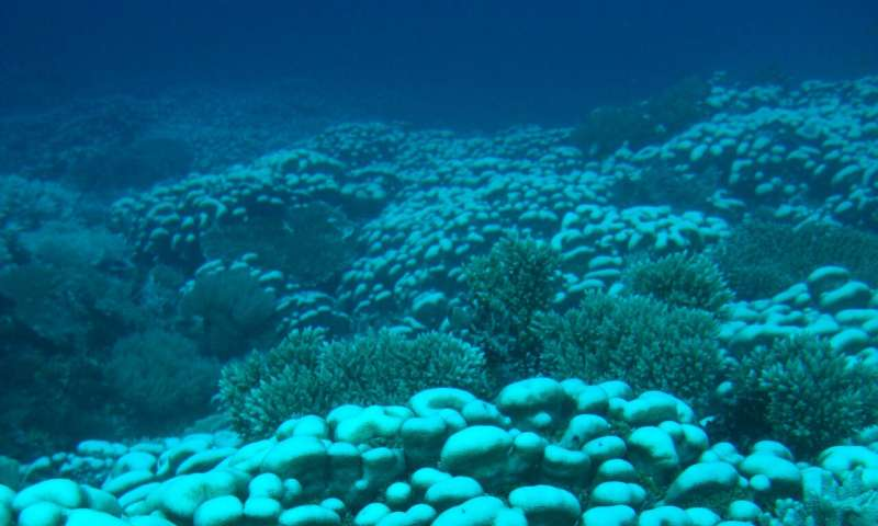 Coral reefs near equator less affected by ocean warming