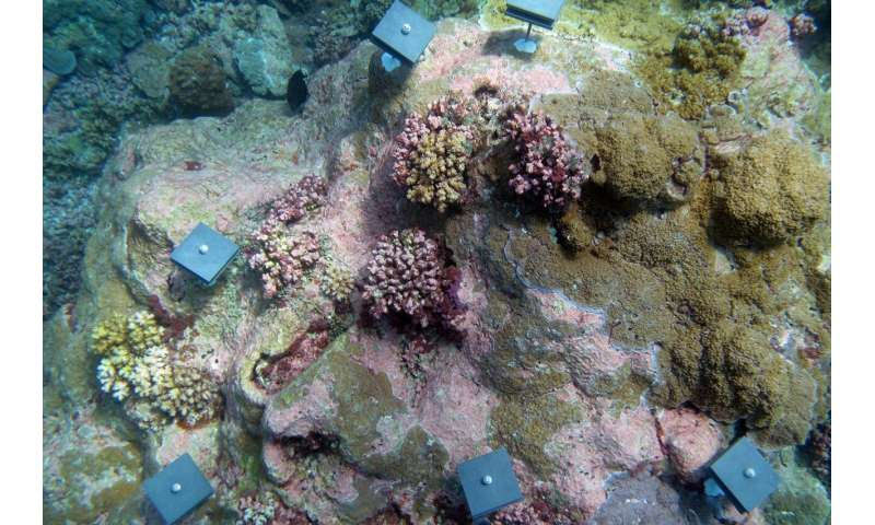 Coral reefs shifting away from equator