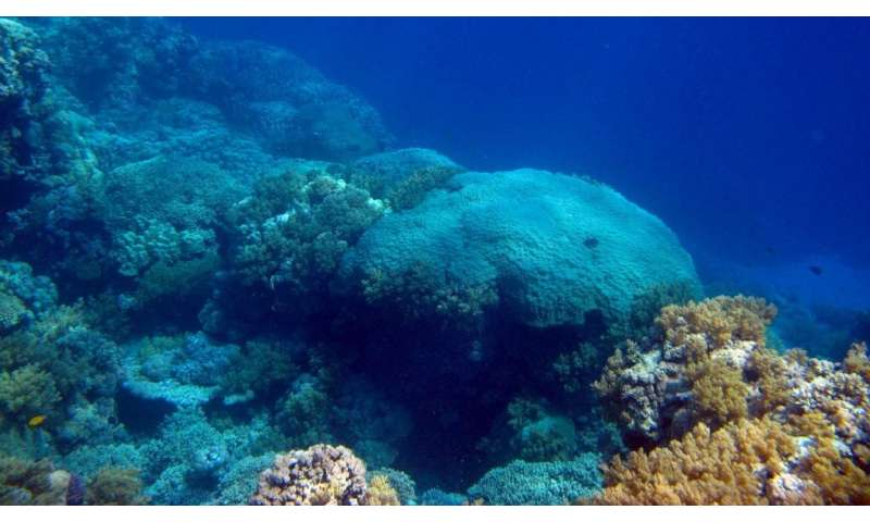 Corals in the Red Sea offer long-term view of south Asian summer monsoon