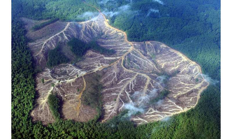 Cutting rainforests down provides a double threat to the environment: it removes a vital sink for planet-warming gases in our at