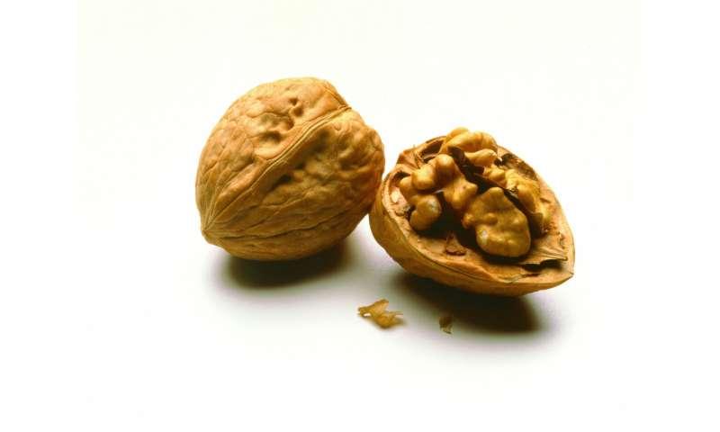 Deciphering the walnut genome