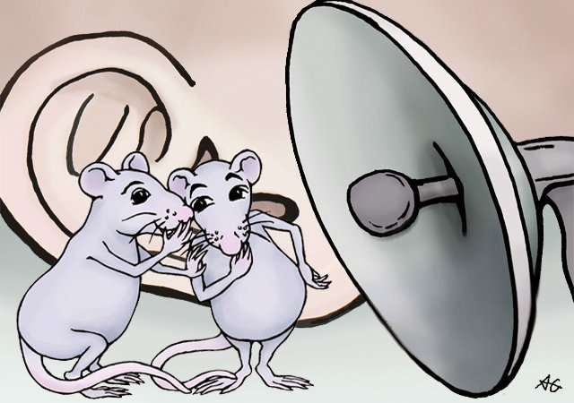 'DeepSqueak' helps researchers decode rodent chatter