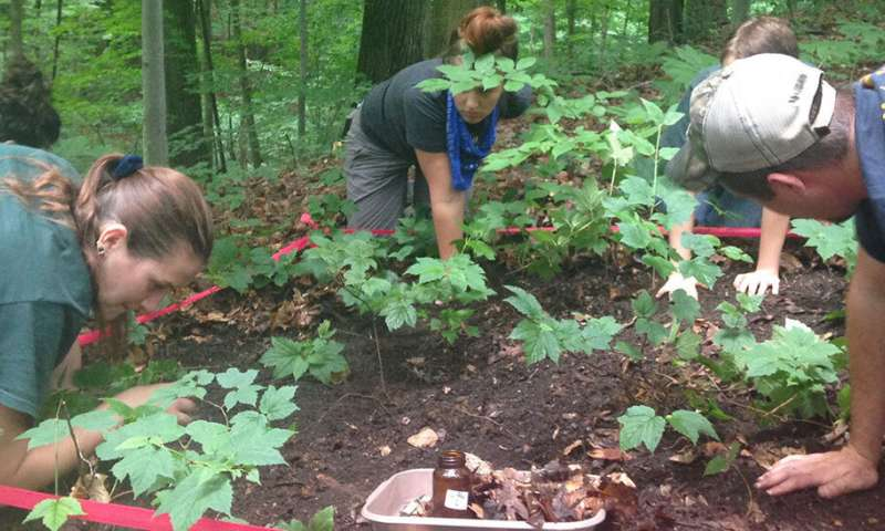 Deer, invasive earthworms gang up to damage forested areas