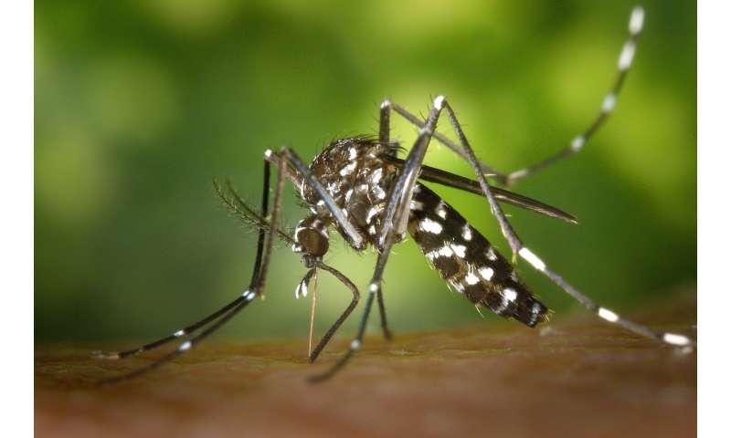 la dengue