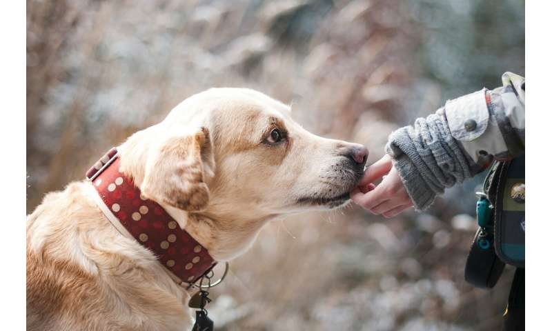 Could dogs be the source of a new flu?