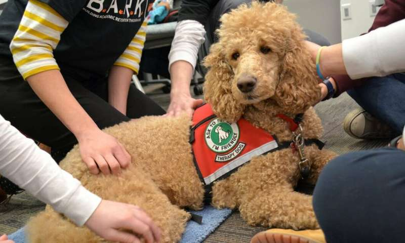 Dog therapy: What I've learned overseeing 60 canine campus teams