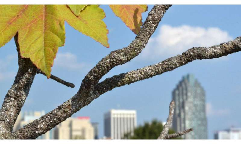 Dying trees in cities? Blame it on the pavement