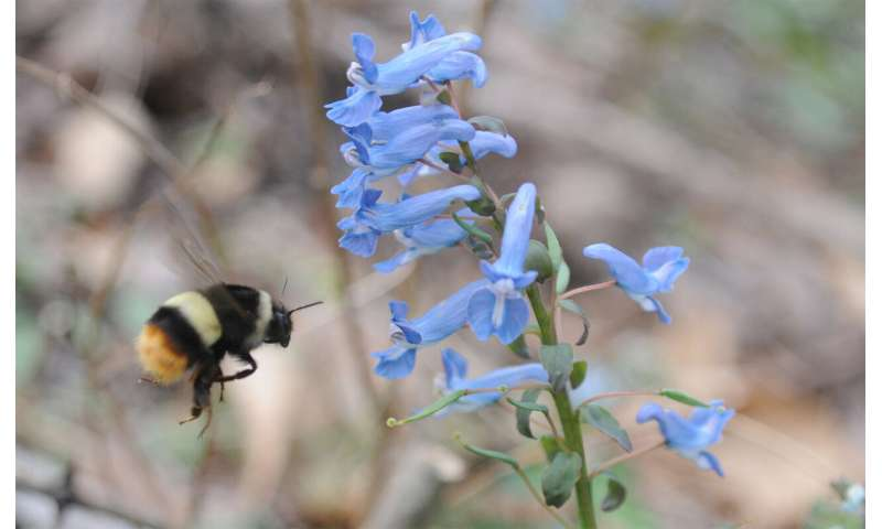 Early arrival of spring disrupts the mutualism between plants and pollinators