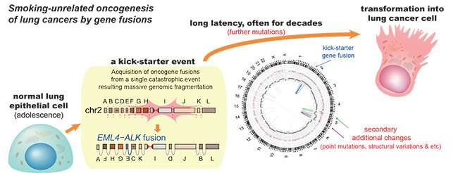 Early genome catastrophes can cause non-smoking lung cancer