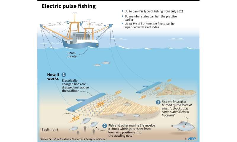 Electric pulse fishing