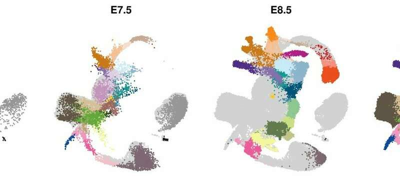Establishing the molecular blueprint of early embryo development