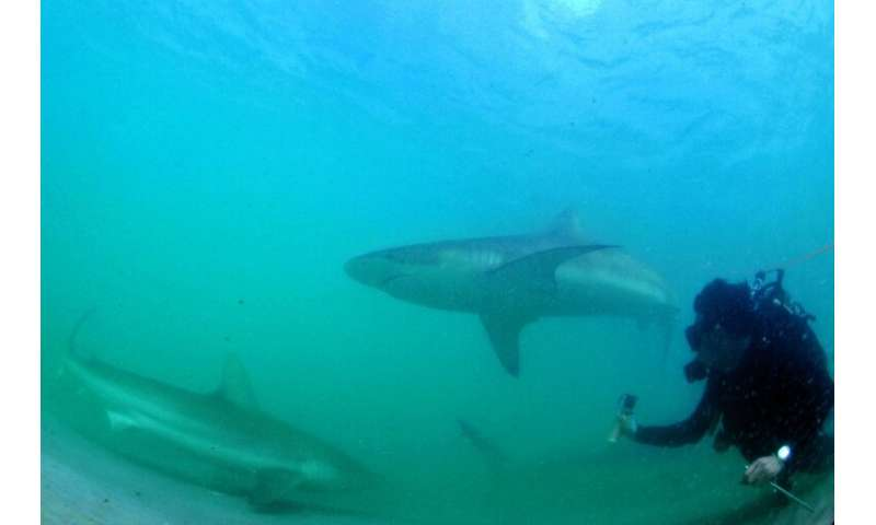 Every winter, as sea temperatures drop, sharks seeking warmer waters head to a northern Israeli shore, drawing enthusiasts hopin