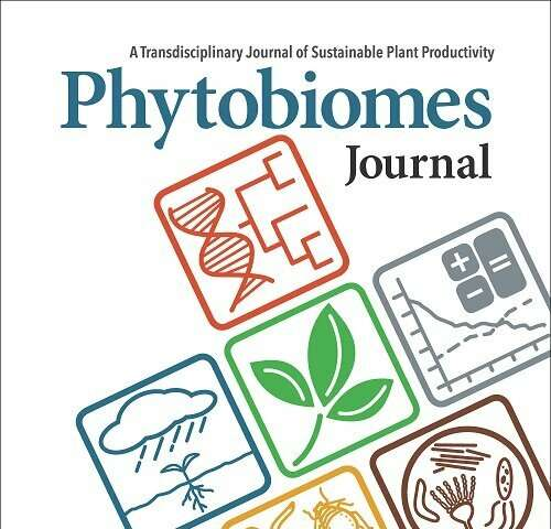Excessive phosphate fertilizer use can reduce microbial functions critical to crop health