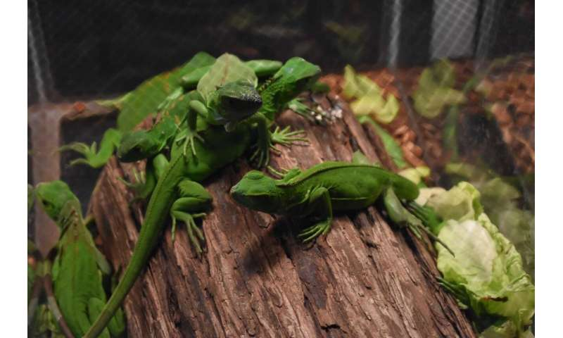 Exotic pets can become pests with risk of invasion