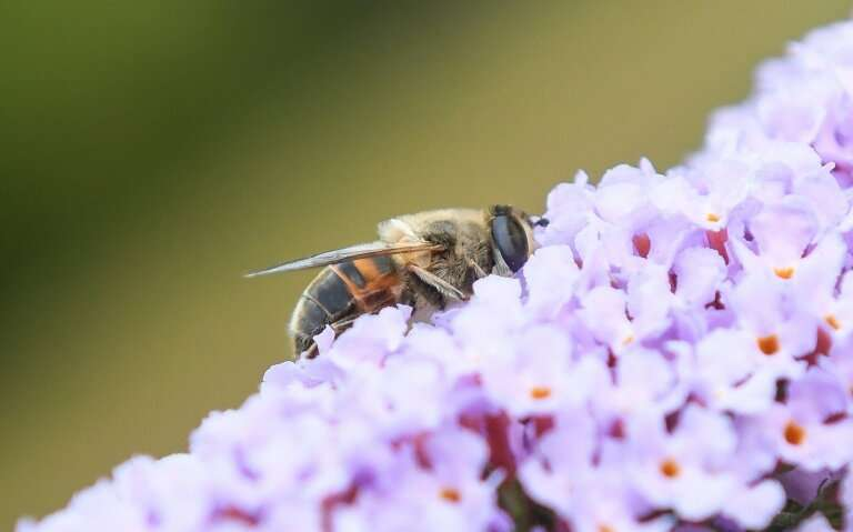 Experts estimate that flying insects across Europe have declined 80 percent on average