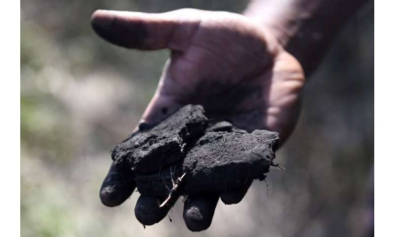 Explaining the increase in coal consumption worldwide