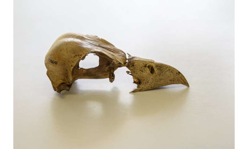 Extinct Caribbean bird yields DNA after 2,500 years in watery grave