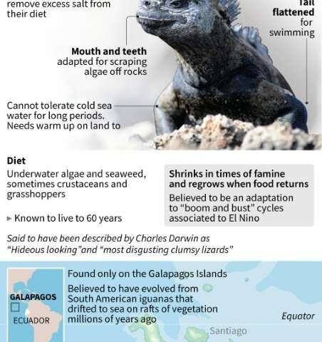 Factfile on marine iguanas in the Galapagos