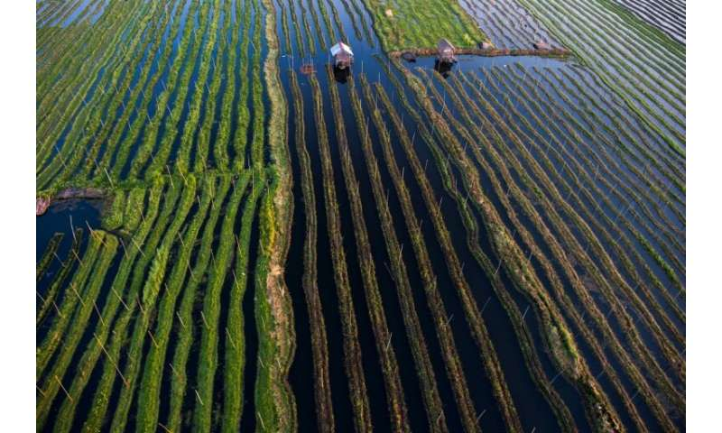 Farmers at Inle Lake grow crops on the water on top of layers of decomposing vegetation
