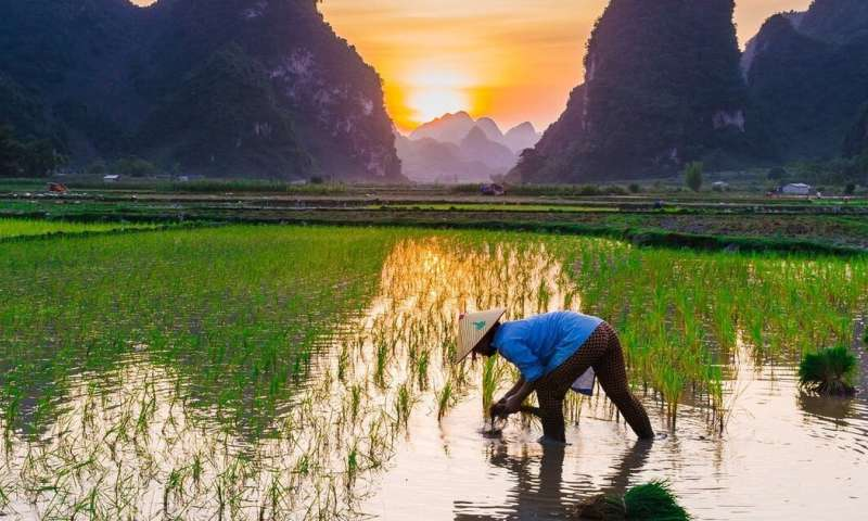 Feeding the world: archaeology can help us learn from history to build a sustainable future for food