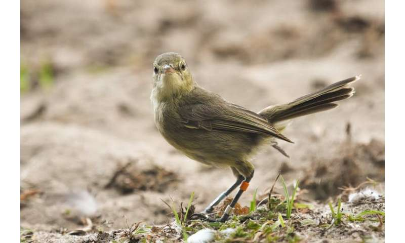 Female warblers live longer when they have help raising offspring