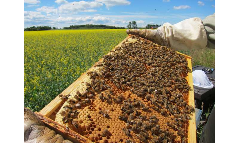 Field trial with neonicotinoids: Honeybees are much more robust than bumblebees