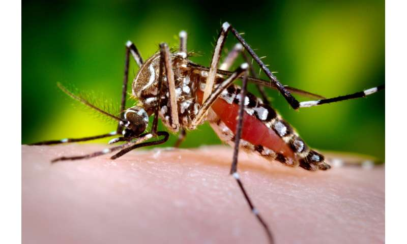 Fighting human disease with birth control ... for mosquitoes