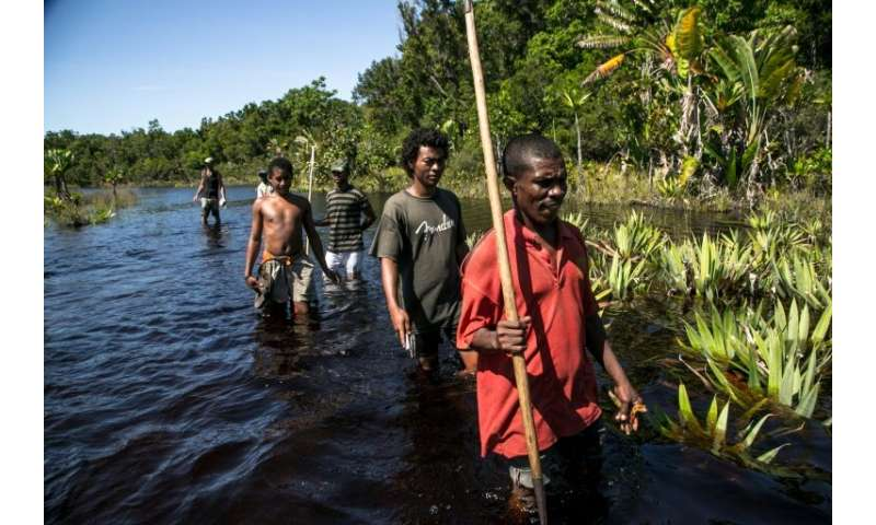 Forest guides in Vohibola have launched a volunteer patrol against poachers. They are armed with sticks and bows and arrows, and