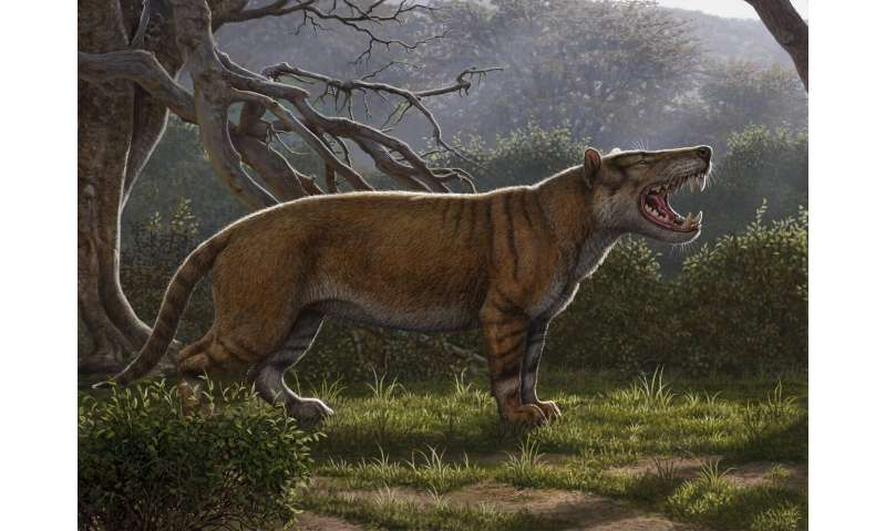 Fossils found in museum drawer in Kenya belong to gigantic carnivore