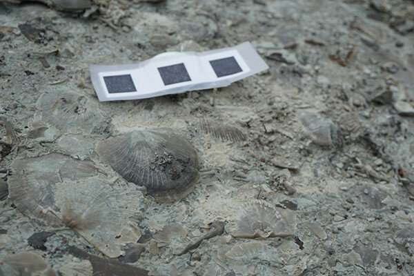 Fossils show recovery from extinction event helped shape evolutionary history