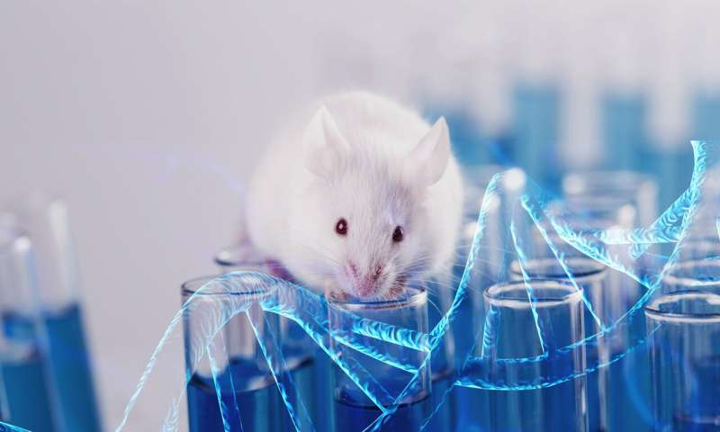 Gene drive technology makes mouse offspring inherit specific traits from parents
