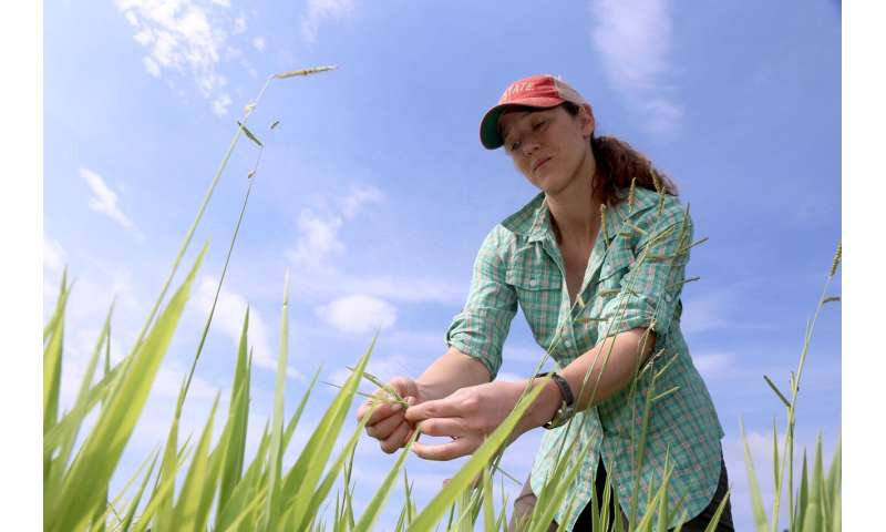 Genetic breakthrough on tropical grass could help develop climate-friendly cattle farms