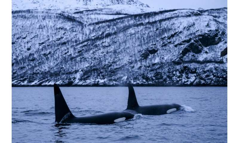 Global warming, fishing and growing numbers of tourists who flock to the region for whale watching and diving pose a threat