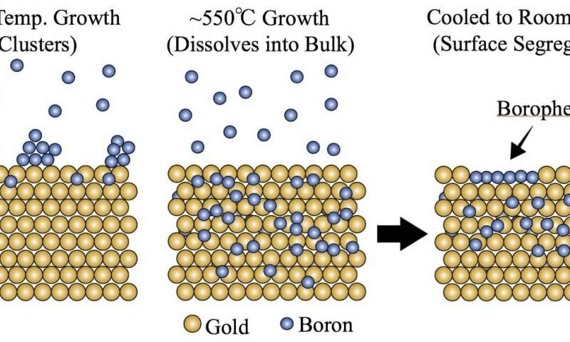 Gold soaks up boron, spits out borophene