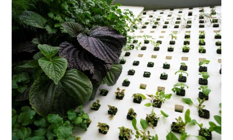 Greens are grown at Bowery Farming, a vertical farming site founded in 2015