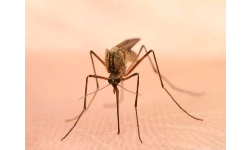 Guidance lists new first-line treatment for severe malaria in the U.S.