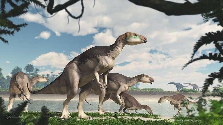 'Herd' of dinosaurs found underground at Lightning Ridge