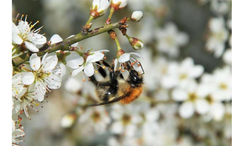 Honeybee mite raises the risk of bee virus