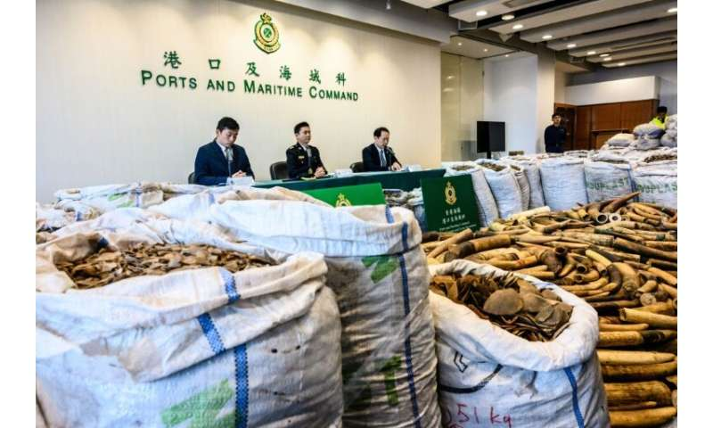 Hong Kong customs seized  8,300 kilos of pangolin scales, the latest huge haul to underscore the city's central role in the lucr