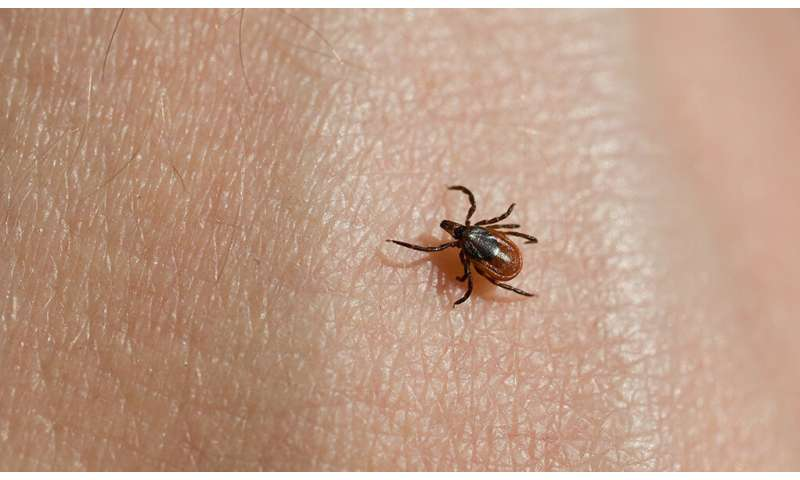 How an emerging tick-borne pathogen evades detection