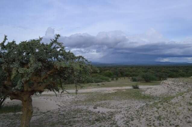How did Africa's grasslands get started?